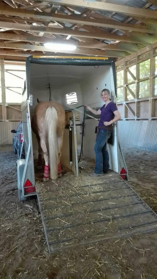verladetraining_rotter-horsemanship